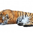 Tiger isolated lies — Stock Photo #1614084