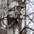 Birdhouse on a birch — Stok fotoğraf