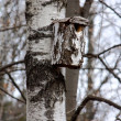 Birdhouse on a birch — Foto Stock