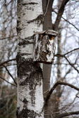 Birdhouse on a birch — Stock Photo