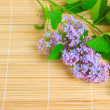 Branch of lilac flower — Stock Photo