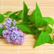 Lilac branch on bamboo background — Stock Photo