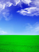 Summer landscape - green field an blue s — Stock Photo