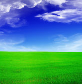 Summer landscape - blue sky and green fi — Stock Photo