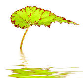 Green leave is the water — Stock Photo