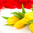 Holiday floral background tulips and ros — Stock Photo