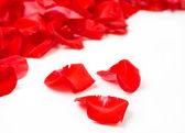 Red rose petals — Stock Photo