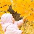 Baby with autumn branch of tree - Stock Photo