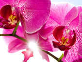 Orchid on the blue, sunny sky — Stock Photo