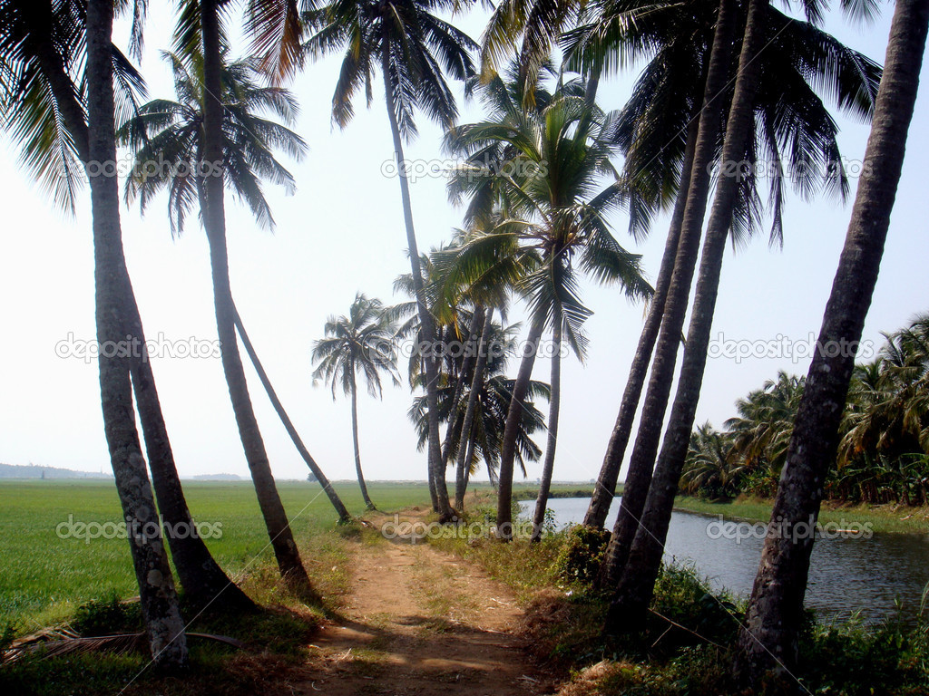 Landscape of a river, coconut trees and Green fields, Scenery  Stock Photo #1593581