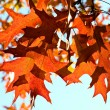 Autumn fall leaves — Stock Photo