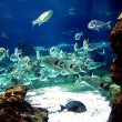 Aquarium fishes - Stock Photo