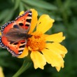 Orange butterfly — Stock Photo #1724399