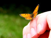 Orange butterfly on humans hand — Stock fotografie