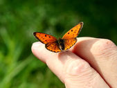 Orange butterfly on humans hand — Stock Photo
