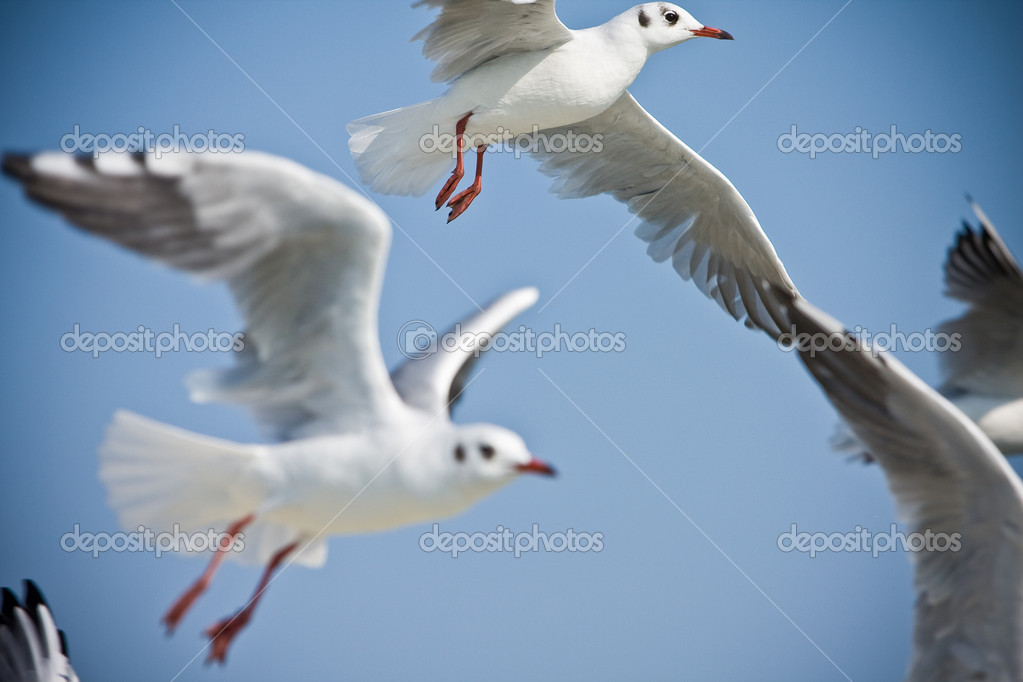 Flock of seagulls flying in the air  Stock Photo #1723971