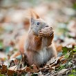 Stock Photo: Squirrel eating a nut
