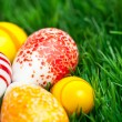 Easter eggs in green grass — Stock Photo #2461449