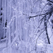 Winter. Trees in ice are frozen Very bea — Stock Photo