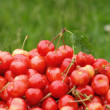 Cherries in green field - Stock Photo