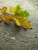 Autumn leaves on wet asphalt — Stock Photo