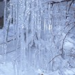 Winter. Trees in ice are frozen — Stock Photo