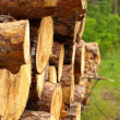 Stock Photo: Sawn up tree