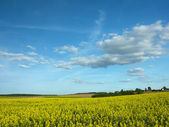 Yellow field and dark blue sky — Stock Photo