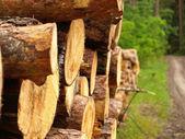 Sawn up tree — Stock Photo
