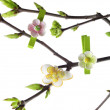 Spring twig — Stock Photo #1642882
