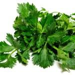 Celery — Stock Photo