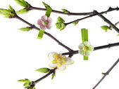 Spring twig — Stock Photo