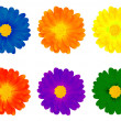 Six colourful flowers — Stock Photo
