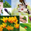 Spring composition — Stock Photo
