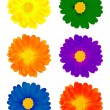 Six colourful flowers - Stock Photo