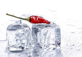 Red pepper and ice cubes — Stock Photo