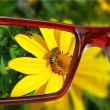 Sight on the flower - Stock Photo