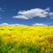 Yellow meadow landscape — Stock Photo