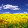 Yellow meadow - Foto Stock