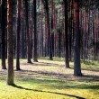 Pine wood — Stock Photo #2169076