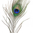 Peacock feather — Stock Photo #1610962