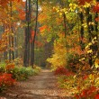 Colors of Fall - Foto de Stock