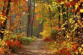 Colors of Fall — Stockfoto