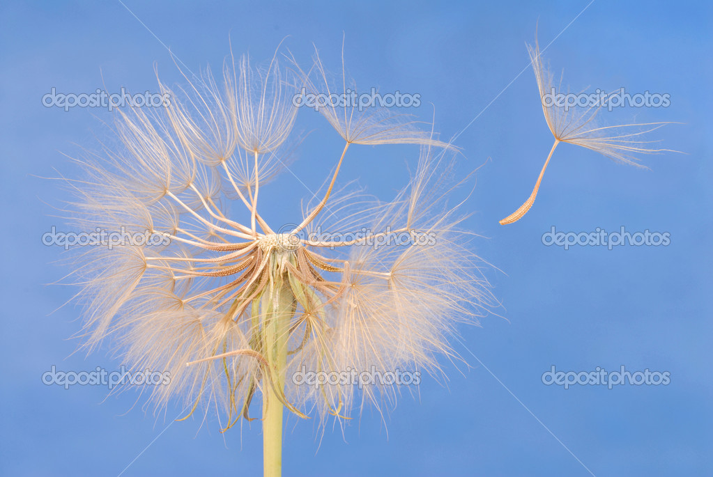 Macro of dandelion clock against blue sky — Stock Photo #1728193