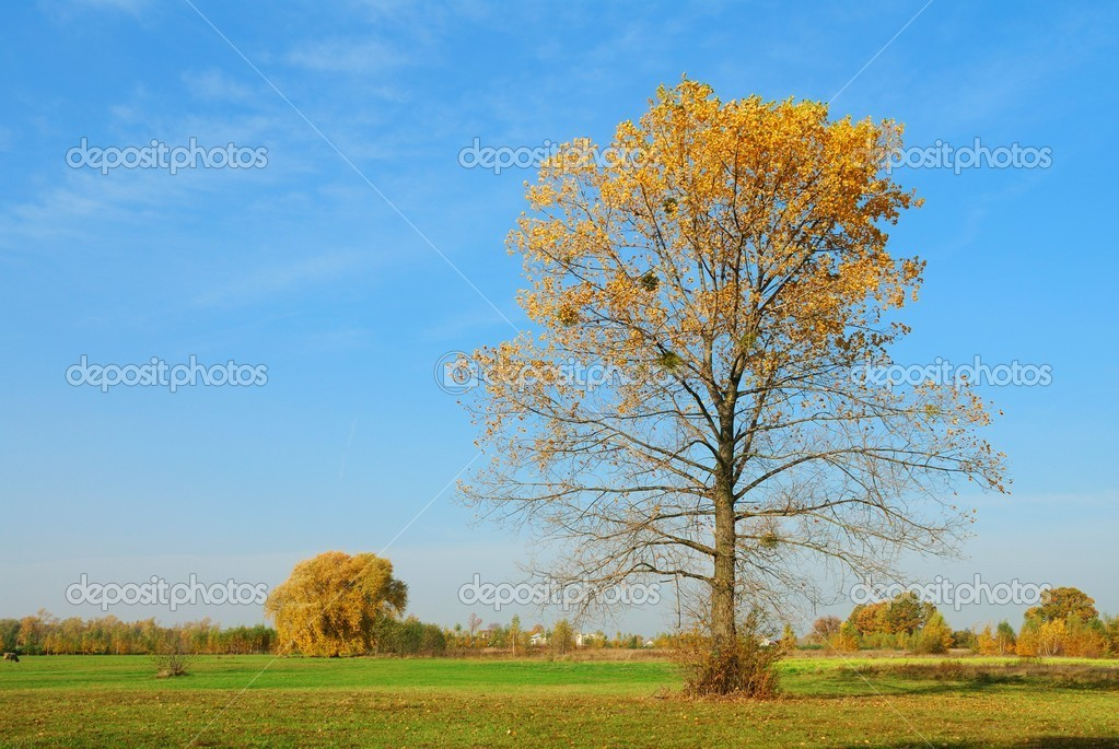 Autumn landscape — Stock Photo #1728410