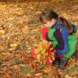 Fall — Stock Photo #1760898