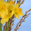 Daffodils on Blue — Stock Photo #1819453