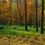 couleurs d'automne — Photo