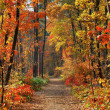 Stock Photo: Colors of Fall