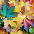 Autumn Leaves — Stock Photo #2398570
